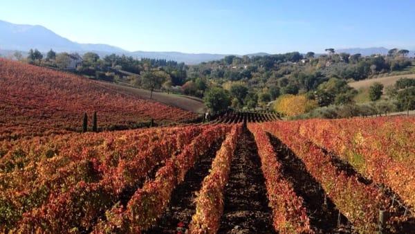 Le migliori cantine irpine secondo la guida internazionale Wine Spectator